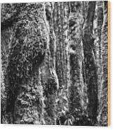 Rainforest Ubiquitous Growth  Wood Print
