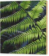 Rainforest Wonder Wood Print