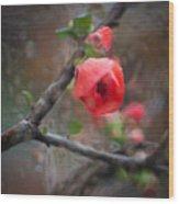 Raining Day Blossom  Wood Print
