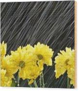 Raining On Yellow Daisies Wood Print