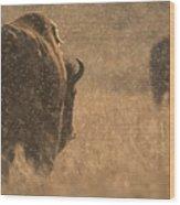 Rainy Bison Wood Print