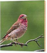 Rainy Day Bird - Purple Finch Wood Print by Christina Rollo