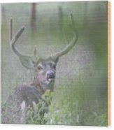 Rainy Day Buck Wood Print