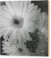 Rainy Day Daisies Wood Print