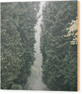Rainy Gloomy Alley In Park Wood Print