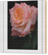Rainy Rose In Macro Poster Wood Print