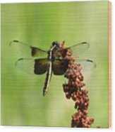 Rally Stripe Dragonfly 7 Wood Print