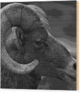 Ram Wood Print by Barbara Schultheis