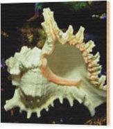 Rams Horn Seashell Wood Print