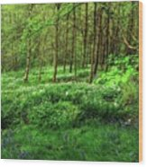 Ramsons And Bluebells, Bentley Woods Wood Print