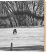 Ranch Horse In The Fields Wood Print