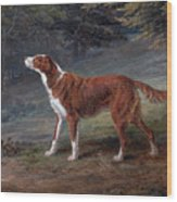 Ranger A Setter The Property Of Elizabeth Gray Wood Print