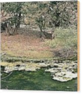 Ranthambore Wood Print