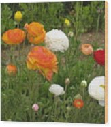 Ranunculus 5 Wood Print