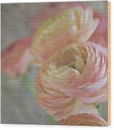 Ranunculus - 6219 Wood Print