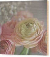 Ranunculus - 6243 Wood Print