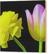 Ranunculus And Tulip Wood Print