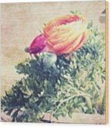 Ranunculus Stilllife Wood Print