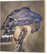 Raptor 21 Wood Print