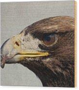 Raptor Wild Bird Of Prey Portrait Closeup Wood Print
