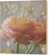 Ranunculus - 6315 Wood Print