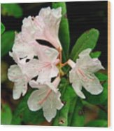 Rare Florida Beauty - Chapmans Rhododendron Wood Print