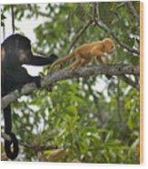 Rare Golden Monkey Wood Print
