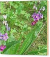Rare Parry Primrose Spring Inlet Trampas Lake Nm Wood Print