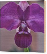 Rare Phragmipedium From Peru Wood Print