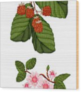 Raspberries And Raspberry Blossoms Wood Print
