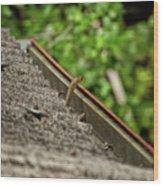 Rat Snake Wood Print