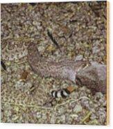 Rattlesnake Devouring Rabbit Wood Print