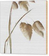 Rattlesnake Grass Number 1 Wood Print