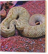 Rattlesnake In Abstract Wood Print