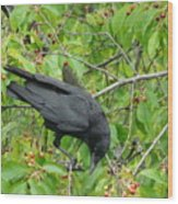 Raven In The Cherry Tree Wood Print