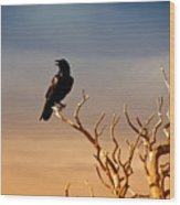 Raven On Sunlit Tree Branches, Grand Canyon Wood Print by Trina Dopp Photography