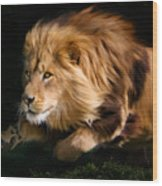Raw Lion Power Wood Print