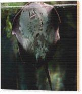 Ray Fish In Paludarium In Zoo Wood Print