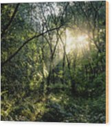 Ray Of Light Through Green Wood Print