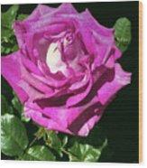 Rays Purple Passion Wood Print