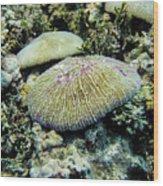 Razor Coral In Kwajalein Wood Print