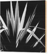Razor Sharp Wood Print