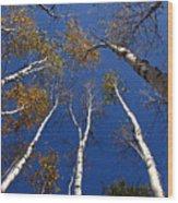 Reach For The Sky Wood Print by Steve Augustin