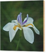 Reaching Iris Wood Print