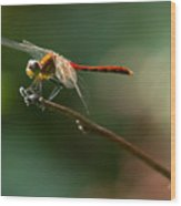 Ready For Flight Wood Print