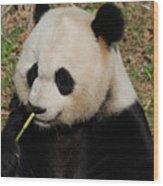 Really Cute Giant Panda Bear With Bamboo Wood Print