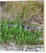 Really Dangerous Alligator Wood Print
