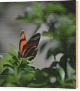 Really Elegant Oak Tiger Butterfly In Nature Wood Print