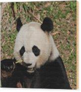 Really Great Panda Bear Chomping On A Fistful Of Bamboo Wood Print