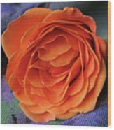 Really Orange Rose Wood Print